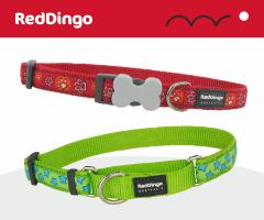 Red Dingo Collier