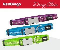 Red Dingo Daisy Chain