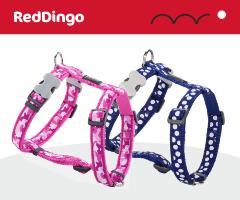 Red Dingo Harnais