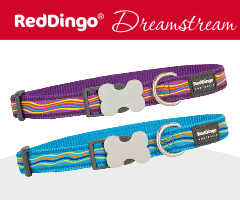 Red Dingo Dreamstream