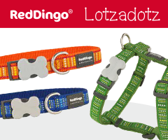 NEW - Red Dingo Lotzadotz