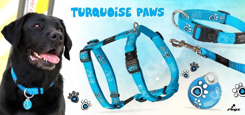 Rogz Turquoise Paw ind en