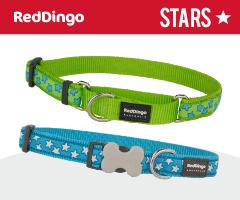 Red Dingo Stars